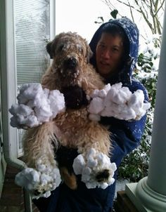 wheaton terrier covered in snow...I remember this!