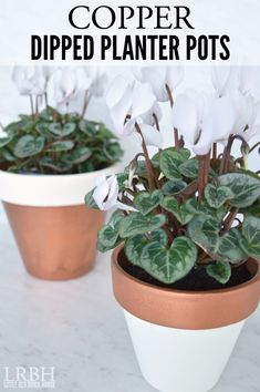 Copper Dipped Planter Pots | LITTLE RED BRICK HOUSE