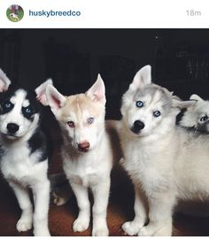 I will take them all