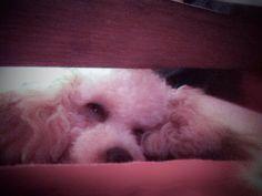 Dolce sonno 💖