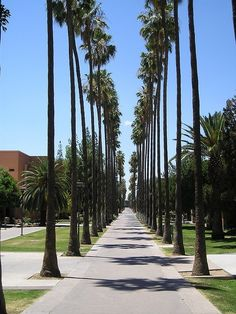 """Palm Walk Arizona State University.  Coming from Massachusetts....the first time I saw this....blew me away...""""I get to go to school here?!"""""""