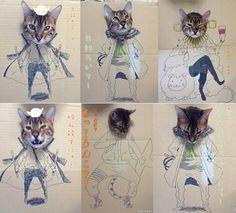 Gatinho vira hit na web ao ser usado em cosplay com caixa de papelão
