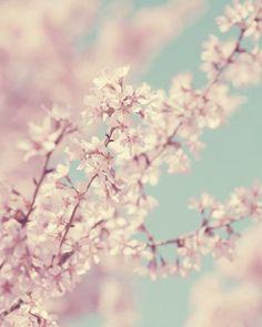 春の桜ペールピンク