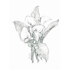 Dibujos de calas - Imagui
