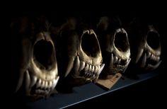 Natural History Museums Behind the Scenes—Copenhagen by Birgitte Rubaek, via Behance