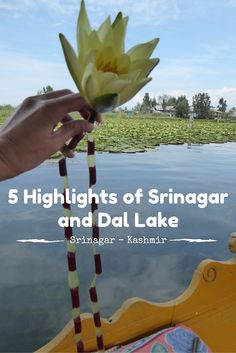 Srinagar is 1 of the biggest cities in the state of Kashmir. The city is situated near the beautiful Dal Lake and attracks many tourists on an annual basis. Kashmir Trip, Kashmir India, Srinagar, Peace And Harmony, Peace And Love, India Travel, India Trip, Range Over, Er 5