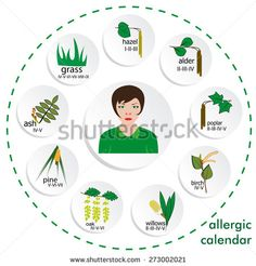calendar of  allergy seasons. separated on white background.vector format