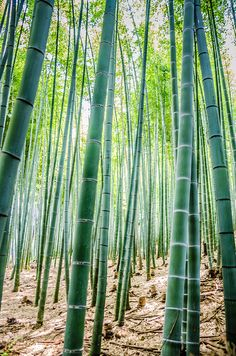 Bamboo Forest of Arashiyama | Flickr - Photo Sharing!