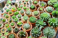 Mission Hills: Mission Hills Nursery sells flowers, trees, soils, and everything else to keep your green thumb flexed. San Diego Neighborhoods, Mission Hills, America's Finest, Sd, Exploring, The Neighbourhood, Succulents, Trees, Nursery