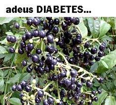 ADEUS DIABETES...MÉTODO NATURAL E EFICAZ PARA TRATAMENTO DA DIABETES É A MAIS RECENTE DESCOBERTA E APOSTA DA MEDICINA NATURAL E ALTERNATIVA... Churros, Health Tips, Bolo Fitness, Pasta, Fruit, Food, Remover Cera, Sopa Detox, Al Dente
