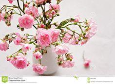 Bildergebnis für kleine rosen
