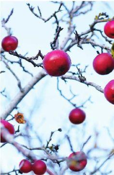 #ClippedOnIssuu da Sweet Paul #11 - Holiday/Winter 2012