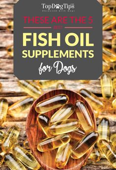 Top 5 Best Fish Oil for Dogs Supplements for Brain, Skin & Arthritis. Supplements like fish oil for dogs, whether in liquid, pill or capsule form, can be a great addition to your pet's healthy diet. #best #dog #supplements #fish #oil #pets #dogs #health #omega3 #joint #hip #arthritis