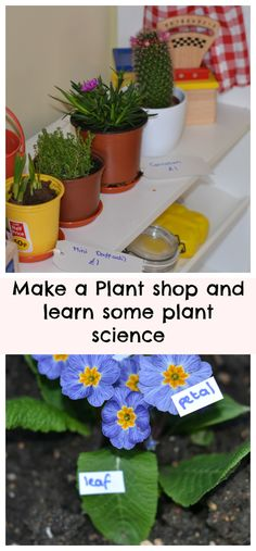 Make a plant shop and learn some plant science #Science #PlantScience #ScienceforKids