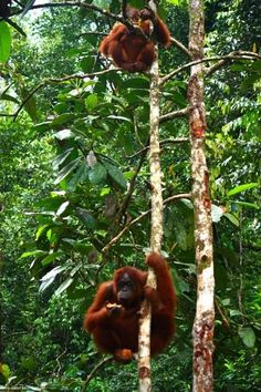 Find out why Borneo is ones of the worlds most sought after destination for lovers of nature, wild life and all things exotic - A Snapshot of Malaysia's Borneo. | Vagrants Of The World