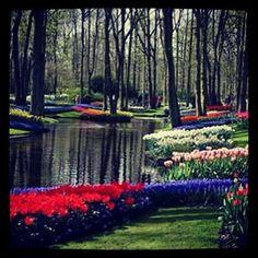 #regram: @jardineriaveranda  The famous Keukenhof Garden.