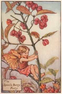 FLOWER FAIRIES/BOTANICALS: The Spindle Berry Fairy; This is an original vintage Cicely Mary Barker Flower fairies colour print. It is not a modern reproduction, c1935; approximate size 11.0 x 7.0cm, 4.25 x 2.75 inches
