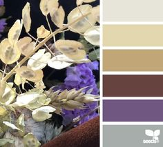 dried hues | design seeds