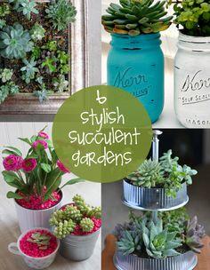 6 Sweet Succulent Gardens | creative gift ideas & news at catching fireflies