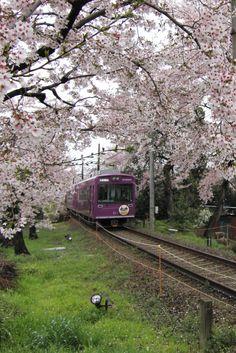 桜のなかをゆっくり走る、嵐電。