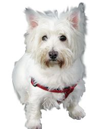 Pet Amber Alerts - locate lost pets
