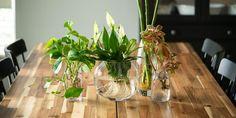 🌷🌼🌺 Τι θα λέγατε να επιλέξουμε αγαπημένα φυτά εσωτερικού χώρου και να τα βάλουμε σε υπέροχα βάζα για να διακοσμήσουμε το σαλόνι και το γραφείο μας; Τα συγκεκριμένα φυτά όχι μόνο διατηρούνται στο νερό χωρίς να παθαίνουν ζημιά, αλλά ριζώνουν και αναπτύσσονται κανονικά χωρίς χώμα. 🌻 Εκτός από πολύ όμορφα για την διακόσμηση, η φροντίδα φυτών εσωτερικού χώρου σε νερό είναι και εξαιρετικά εύκολη, καθώς απαιτεί την ελάχιστη περιποίηση.