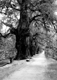 Paseo de los poetas en el bosque de Chapultepec