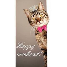 >''<   Happy Weekend  >''