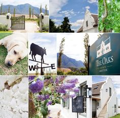 The Oaks Estate In Greyton Is Such A Gorgeous Wedding Venue
