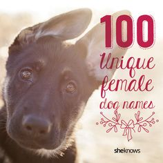 Unique dog names for your beautiful new girl.