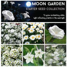 #moongarden
