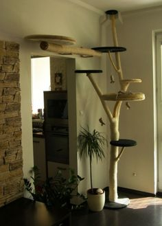Indoor Cat Tree Ideas For Play And Relax Home Design Interior Room Bb Chat, Diy Cat Tree, Cat Towers, Cat Shelves, Shelf, Cat Room, Cat Condo, Pet Furniture, Furniture Ideas