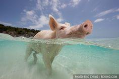 Chanchitos en la playa !! ლ(╹◡╹ლ)