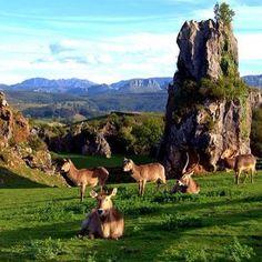 #Cabarceno #Cantabria #ParquesDeLaNaturaleza