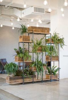 chic plants in a workspace