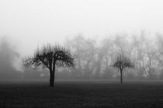 Two Trees in the Fog by Dave Rogers on One Tree, Tree Of Life, Chrome Extensions, Two Trees, Rare Images, Picts, Garden Trees, Forests, Cold Weather