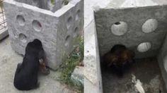 Saksıdan köpek kurtarma operasyonu.. Detaylar ajanimo.com'da.. #ajanimo #ajanbrian #animal #hayvan #dog #köpek #hayvansevgisi #haber
