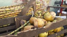 Sugar Cane and Coconuts Jamaican Cuisine, Coconuts, Firewood, Pumpkin, Sugar, Foods, Vegetables, Food Food, Woodburning