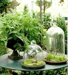 A cool, shady retreat is the perfect spot for this tabletop grouping of a fern and moss enclosed in cloches. The glass covering keeps the moss moist and makes it a low-maintenance choice. Dream Garden, Garden Art, Garden Plants, Garden Design, Garden Cloche, Garden Terrarium, Terrarium Bowls, Terrarium Ideas, Air Plants