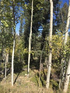 2.62 Undeveloped Treed Acre Lot for Sale!