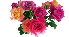 Bouquet flowers PNG image with transparent background Beautiful Rose Photos, Beautiful Bouquet Of Flowers, Wedding Flowers, Hd Rose, Bouquets, White And Pink Roses, Transparent Flowers, Rose Images, Scrapbooking
