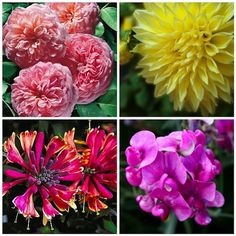 """""""Great Blooms to Grow in Seattle"""" -- I am sure they are similar to what to grow in Portland too!"""