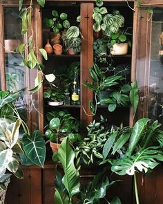 Indoor Vertical Gardening Tips and Ideas Organic gardening isn't always about food to eat. Some people enjoy growing flowers and other forms of plant life as well. You can grow anything bereft of harmful chemicals as long as you're d Decoration Plante, Plant Aesthetic, Pot Plante, Room With Plants, Ficus, Plant Decor, Houseplants, Indoor Plants, Indoor Gardening