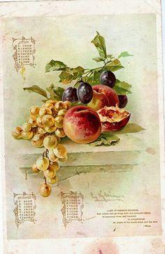 Frutas - Catherine Klein