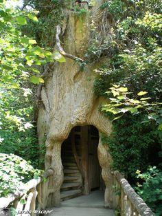 Entrée mystérieuse du festival dans un arbre creux