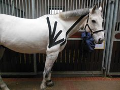 Tape your horse for non-restrictive support for injured or working joints and muscles