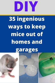 Diy Pest Control, Bug Control, Simple Life Hacks, Useful Life Hacks, House Cleaning Tips, Cleaning Hacks, Mice Repellent, Home Defense, Natural Cleaning Products