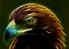Glowing Gold.  Fractalius image of a golden eagle.  Available at IncrediblePhotoArt.com