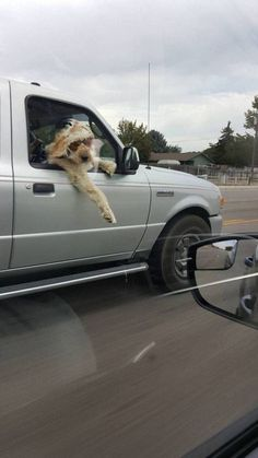 The 20 Funniest Pics of the Day Perfectly Timed Photos, Funny Animals, Funniest Animals, Adult Humor, Best Funny Pictures, Cool Photos, Adulting, Friends, Travel
