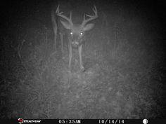 Camera in The Corner - 8-pt Buck 10/14/14